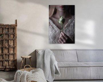 Rose von Arnold van Rooij