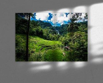 Rijstvelden met waterval, ricefields with waterfall van Corrine Ponsen