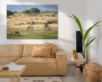 Zebras in der hügeligen Landschaft Südafrikas von Simone Janssen