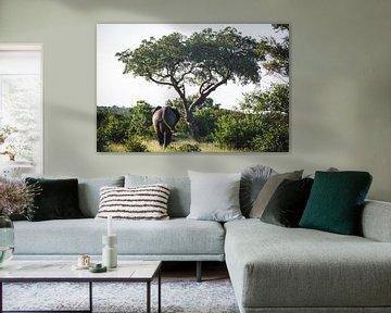 Olifant gezien vanaf de rug, lopend naar een boom van Simone Janssen