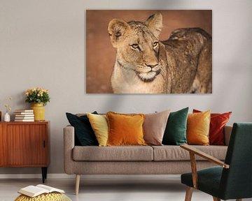Nahaufnahme eines Porträts einer Löwin im warmen Sonnenlicht von Simone Janssen
