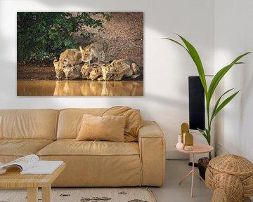Gruppe von Löwen trinkt Wasser am Fluss von Simone Janssen
