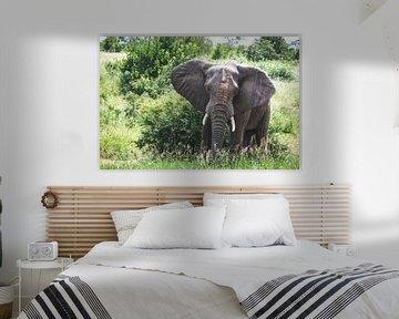 Grote olifant staat in het groen met zand op zijn kop van Simone Janssen