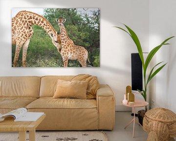 Mutter Giraffe schmust mit ihrem Kind von Simone Janssen