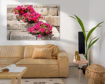 Mit Blumen geschmückte alte Treppe, Taormina, Provinz Messina, Sizilien, Italien, Europa, Sizilien,  von Torsten Krüger