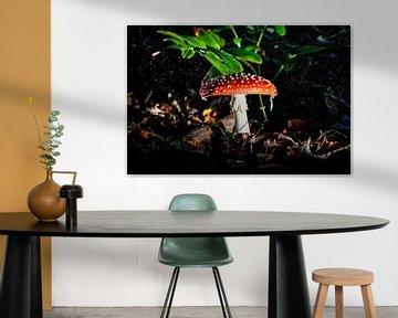 Rood met witte stippen in de regen, vliegenzwam, mushroom van Corrine Ponsen