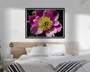 bloem von Francisco de Almeida