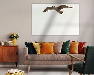 Seagull sur Francisco de Almeida
