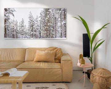 Panorama-Schneebedeckte hohe Bäume in Finnland von Rietje Bulthuis