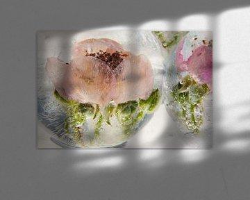 Wilde braambesbloesem in ijs 3 van Marc Heiligenstein