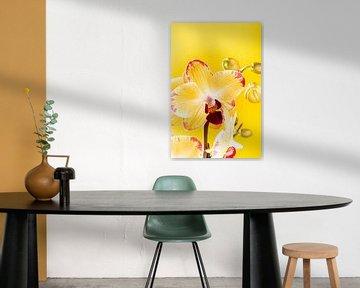 Binnenplant gele orchidee. van Iryna Melnyk