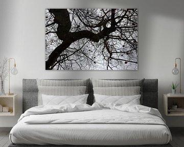 Naked tree von Francisco de Almeida