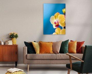 Binnenplant kamerplant gele orchidee van Iryna Melnyk