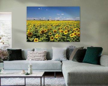 Zonnebloemveld in Saksen-Anhalt van Karina Baumgart