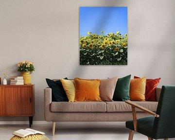 Zonnebloemveld van Karina Baumgart