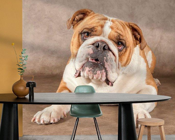 Beispiel fototapete: Englische Bulldogge von Tony Wuite
