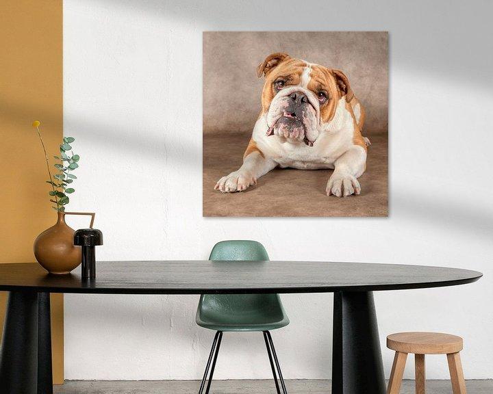 Beispiel: Englische Bulldogge von Tony Wuite