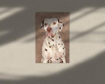 Dalmatinisch von Tony Wuite