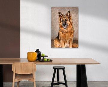 Deutscher Schäferhund von Tony Wuite