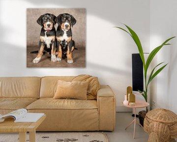 Appenzeller Sennenhund von Tony Wuite