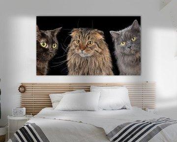 Katzen von Tony Wuite