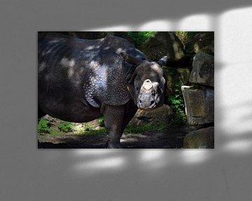 Das Nashorn von Winfred van den Bor