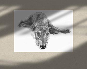 Tanja, Windhund von Wilfried van Dokkumburg