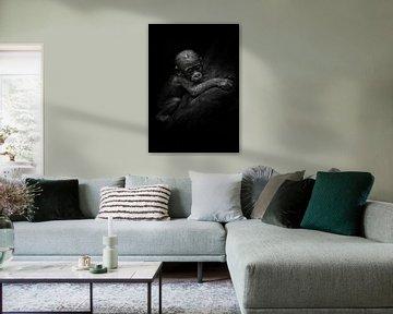 triste petit ourson. Mignon petit gorille qui s'accroche au manteau de sa mère. Fond noir isolé. sur Michael Semenov