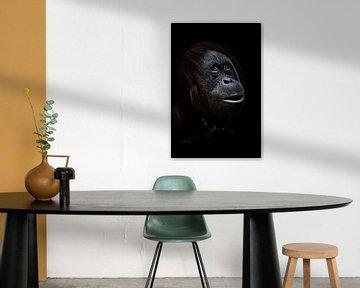 Träume. Ein listig überraschter Orang-Utan vor einem grünen Hintergrund, ein Gesicht in Nahaufnahme, von Michael Semenov
