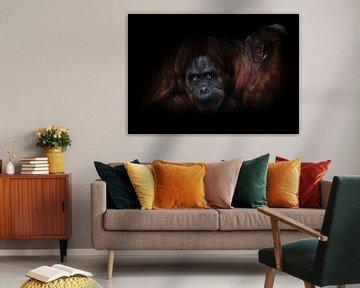 Ein phlegmatischer Orang-Utan mit einer erhobenen Hand auf dunklem Hintergrund bietet sozusagen Armd von Michael Semenov
