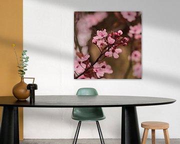 Rosa Frühlingsblütenbäume im März von JM de Jong-Jansen