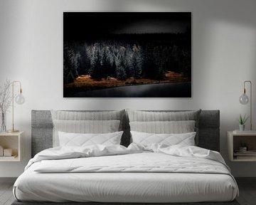 Het Zwarte Woud bij nacht van Ella Schnur