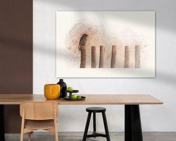 """Kaapse Zwaluw"" - Photography & Art van - GreenGraffy -"