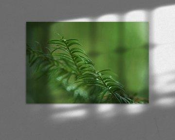 Außergewöhnliches Grün von JM de Jong-Jansen