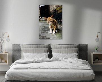 Straat kat van Petro Luft