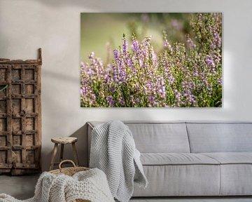 Lila blühende Heidekrautpflanzen auf dem Feld von Michel Geluk
