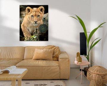 Afrikaanse leeuwenwelpje kijkt je aan van Patrick van Bakkum