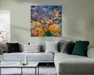 Kleurenpracht van Peter Malaise