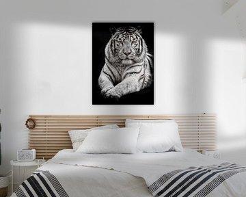 Weißer Tiger mit blauen Augen von Elles Rijsdijk