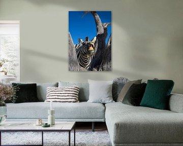 Zebra portrait von Alex Neumayer