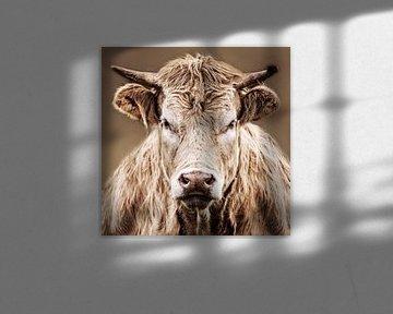 Nahaufnahme einer wütenden Kuh von Diana van Geel