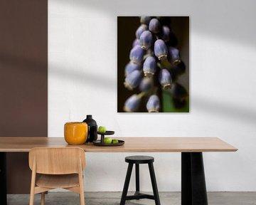 Blauwe druif van Martijn Wit