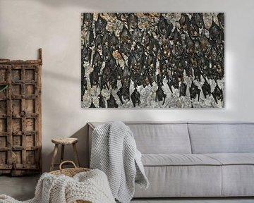 Viele Fledermäuse hängen. Fledermäuse in der Höhle Nepal, Pokhara: Fledermäuse an der Decke der Fled von Michael Semenov