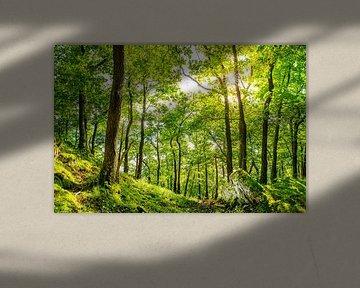 Une forêt avec du soleil sur Günter Albers