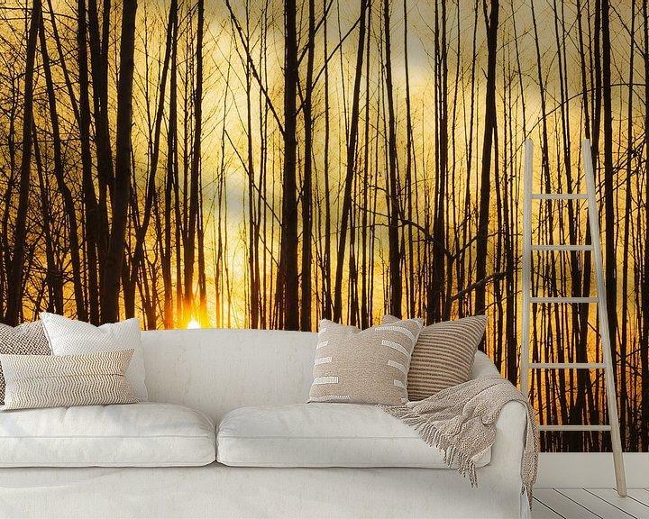 Impression: Coucher de soleil derrière les arbres sur Frank Herrmann