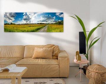 Sommerwiese mit Radweg von Günter Albers