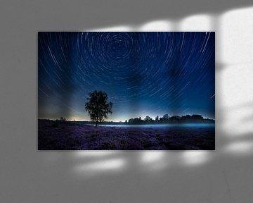 Traces d'étoiles au-dessus de la lande violette