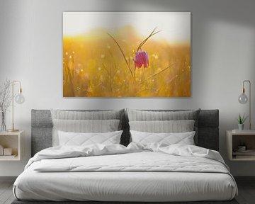 Kievitsbloem in een weiland tijdens een mooie voorjaars zonopkomst van Sjoerd van der Wal