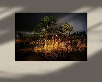salutation au soleil sur Stefan Havadi-Nagy