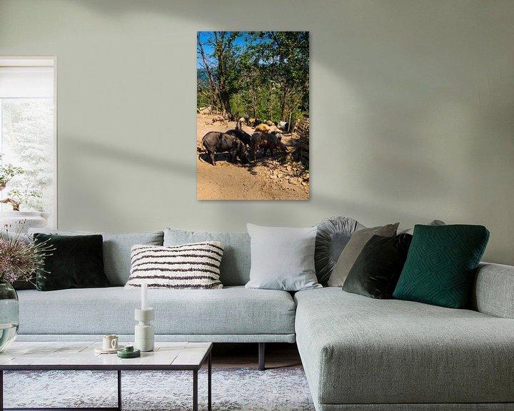 Sfeerimpressie: Varkens in Corsica van Youri Mahieu